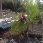 Ein Paradies für Papageie: Panama. Foto: Elena Glombik